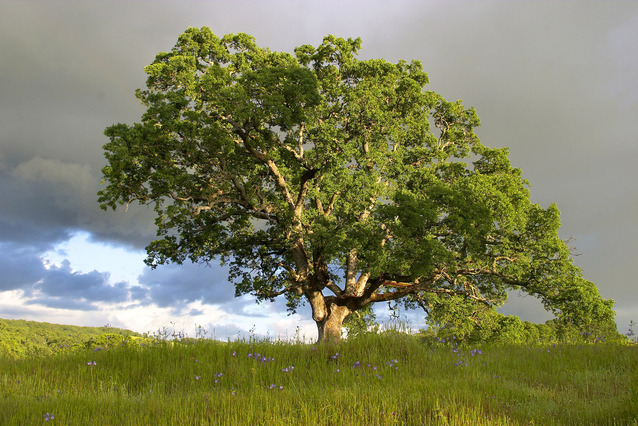 the real importance of trees in our life